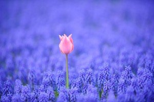 Local Japan Times / Flickr