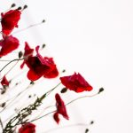 tall poppies