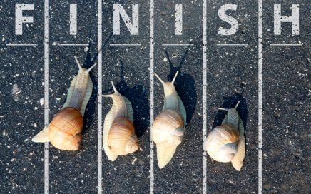 Racing snails near the finish line