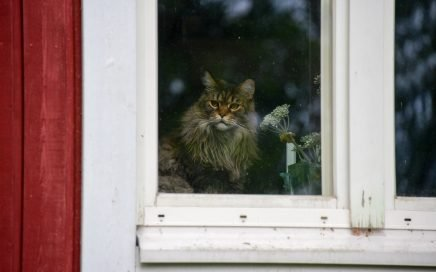 Image: cat staring from behind a window