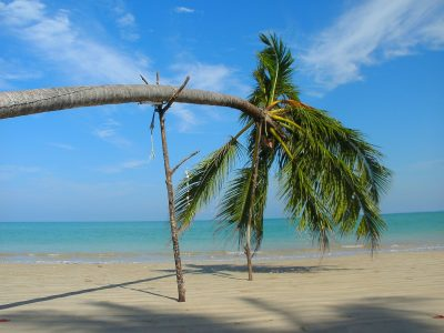 Image: beach scene with palm tree leaning horizontally, staked up by tree branches